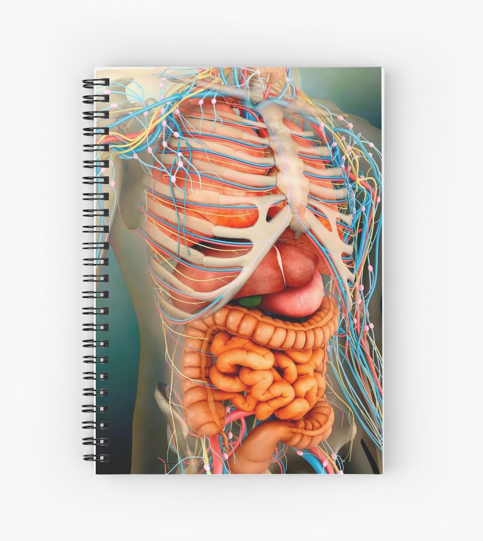 Cuadernos de espiral «Vista en perspectiva del cuerpo humano ...