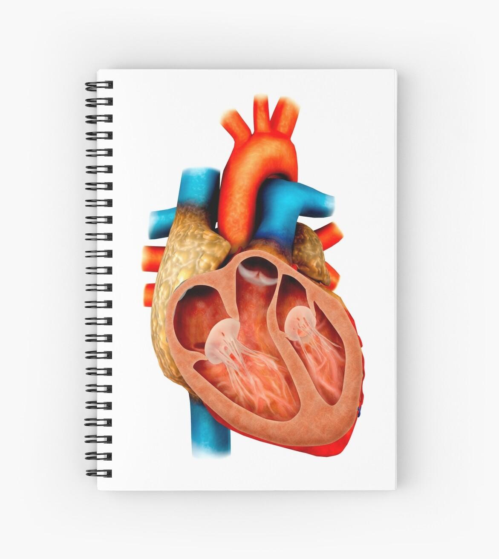 Cuadernos de espiral «Anatomía del corazón humano, sección ...