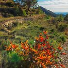 Bush and trees on mountain side by Ralph Goldsmith