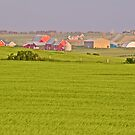 Fields and Farms by John Butler