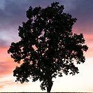 Tree by Radek Hofman