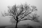 Memory in the Mist by Robin Clifton