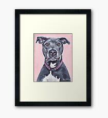 Pit Bull Dog Art Framed Print
