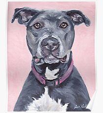 Pit Bull Dog Art Poster