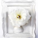 White Camellia in White Vase Frame by DPalmer