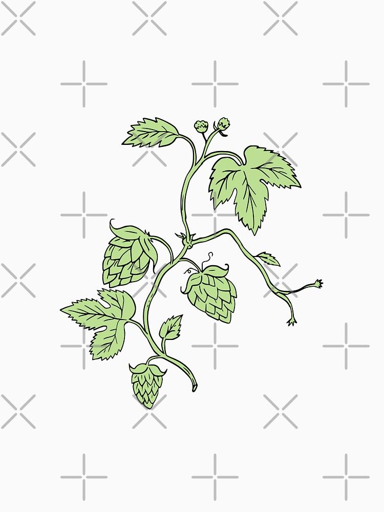 Hopfenpflanze, die Zeichnung klettert von patrimonio