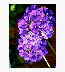 Cluster of Purple Flowers Photographic Print