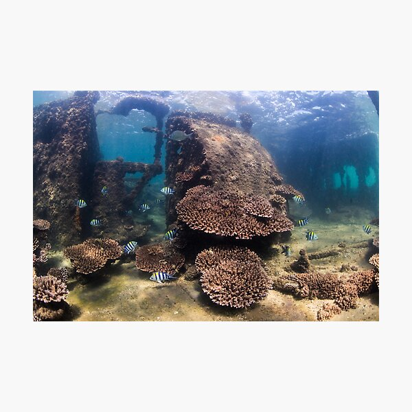Tangalooma Wrecks 1 Photographic Print