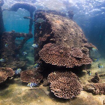 Tangalooma Wrecks 1 by KaraMurphy