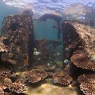 Tangalooma Wrecks 2 by Kara Murphy