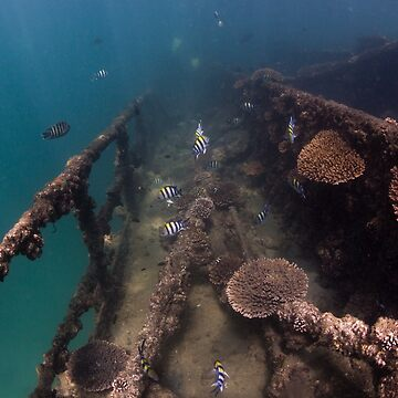 Tangalooma Wrecks - 3 by KaraMurphy