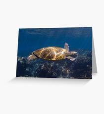 Green turtle - Flinders Reef Greeting Card