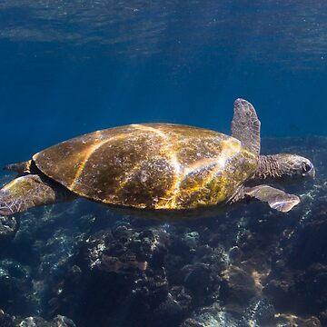 Green turtle - Flinders Reef by KaraMurphy
