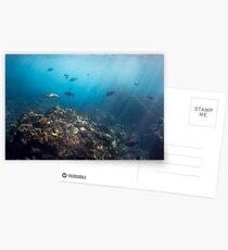 Flinders Reef Postcards