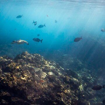 Flinders Reef by KaraMurphy