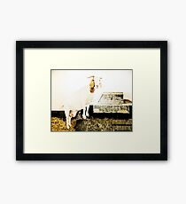 Animal Farm 2 Framed Print