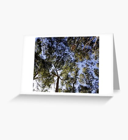 Eucalyptus Tree Canopy Greeting Card