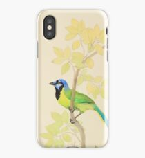 Colorful Green Jay with Foliage iPhone Case