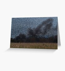 Starling Roost! Greeting Card