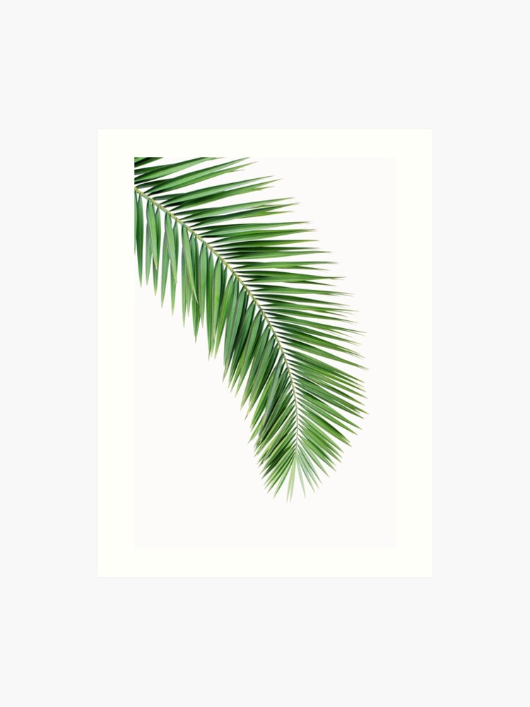 photo relating to Palm Leaf Printable called Palm leaf wall decor, printable leaf palm, printable palm leaf, palm leaf printable, palm leaf poster, palm leaf wall artwork, palm tree print Artwork Print