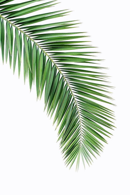 Palm leaf wall decor, printable leaf palm, printable palm leaf ...