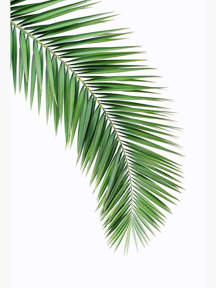 Palm Leaf Wall Decor Printable Leaf Palm Printable Palm Leaf Palm Leaf Printable Palm Leaf Poster Palm Leaf Wall Art Palm Tree Print Art Board Print By Posterartprints Redbubble Geometric pink concrete gray rose gold printable wall art digital prints abstract nordic canvas. redbubble