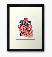 Interior of human heart. Framed Print