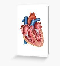 Interior of human heart. Greeting Card