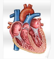 Interior of human heart. Poster