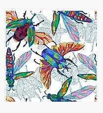 Beetles and flies Photographic Print