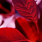 Sun Through Red Leaves by Rebecca Freeman