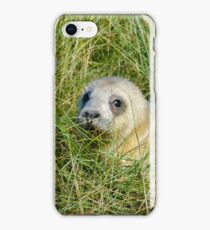 Seal pup in the grass at Donna Nook iPhone Case/Skin