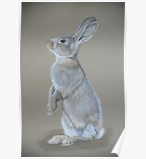 Sitting Tall Bunny Colored Pencil Drawing Poster