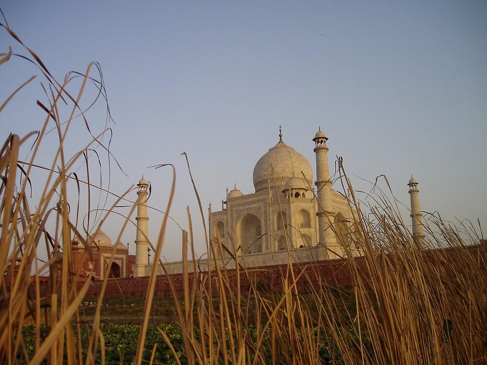 Taj Mahal - back view by Kath Cashion