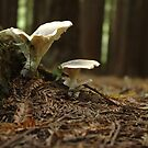 mushrooms by appletea