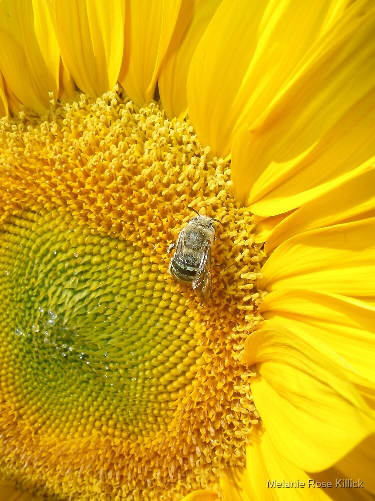 Bee mine by Melanie Rose Killick
