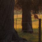 Sunset at Three Springs by Pilgrim