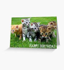 Cute Kittens Happy Birthday Greeting Card Greeting Card