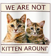 We Are Not Kitten Around Poster