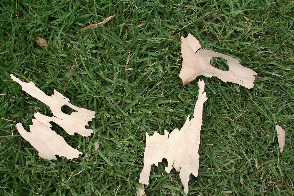Barking Llama by emmeline