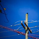 Crow, Crane & Cables by Honario