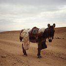 Syria 1990 Donkey by Pilgrim