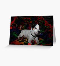 "Jack Russell Terrier my baby Allie Marie ""Allie girl"" Greeting Card"