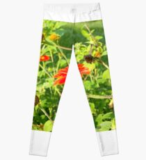 Mexican Sunflowers and Pollination Bees Leggings