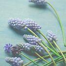 Little Blue Flowers by OLIVIA JOY STCLAIRE