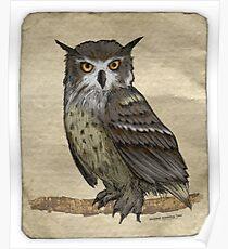 OWL in the Desert... Poster