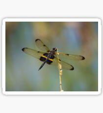 Yellow Barred Flutterer Dragonfly Sticker