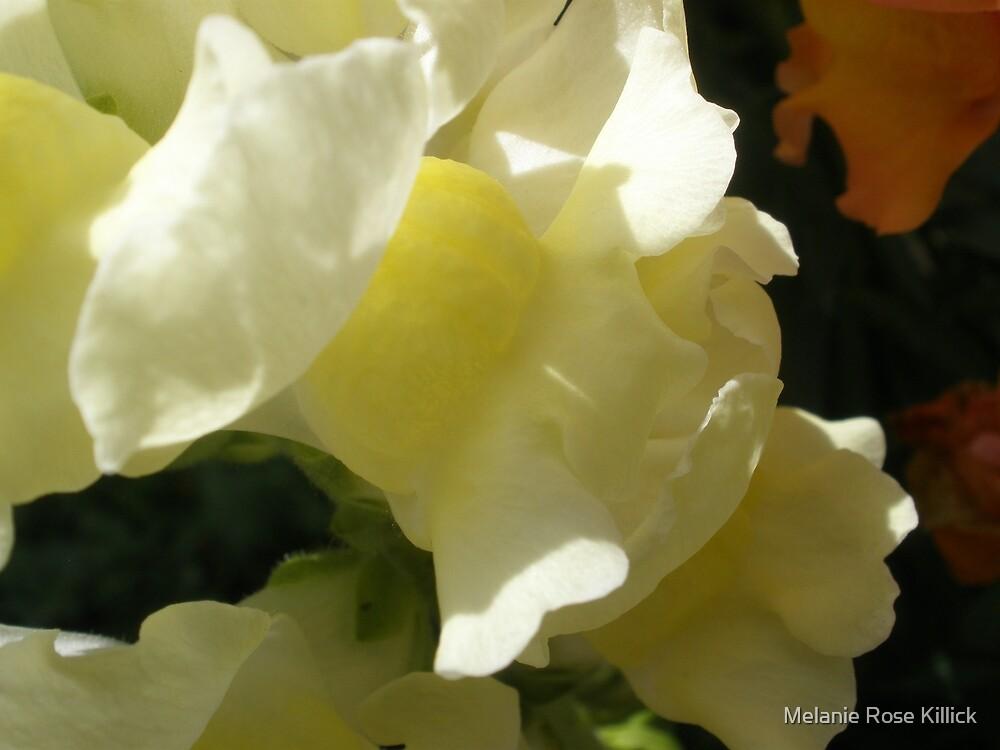 Cream by Melanie Rose Killick