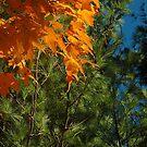 fall tree by Brennen Cole