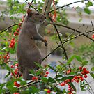 New Orleans - Garden District Squirrel by ACImaging